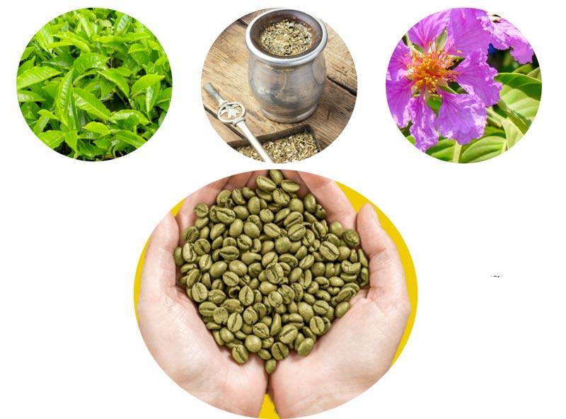 Ingredienti dell integratore Re Lipo Green